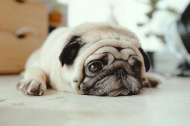 愛犬を手厚く介護してくれる老犬ホーム。施設選びのポイントは?
