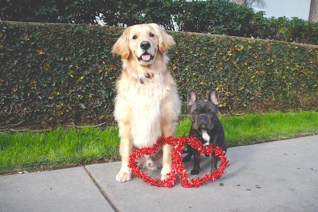 犬の寿命はどのくらい 愛犬に長生きしてもらうためにできること Qooppy