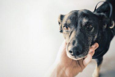 犬の寿命はどのくらい?愛犬に長生きしてもらうためにできること