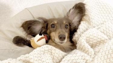 老犬は意外なことがストレスに!環境を見直してストレス解消を