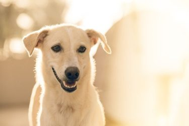 シニア犬にサプリメントは必要?効果や注意点は?
