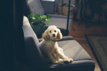 シニア犬にストレスは禁物!ストレスサインを見落とさないで
