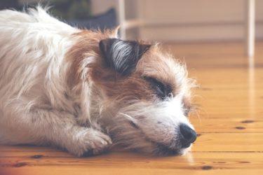 老犬の介護は何が必要?介護の基本的な考え方と役立つ介護用品
