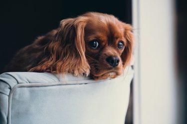 老犬に多いガン(癌)。症状や治療法をわかりやすく解説します!