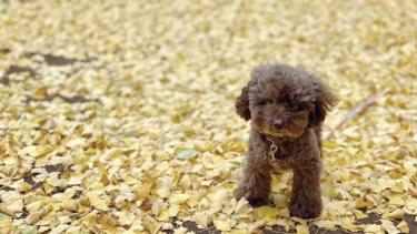 老犬に優しいお散歩の仕方。注意点や参考になるアイデアをご紹介