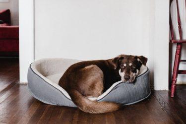 シニア犬でもペット保険に入れる?おすすめのペット保険はどこ?