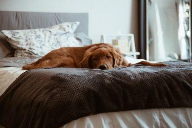 愛犬の見た目と行動に現れる老化のサイン。どう対処すべき?
