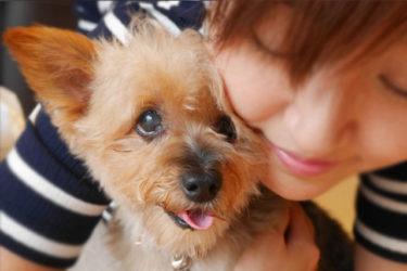 老犬って本当に可愛い!愛犬が年を取ると、愛おしさが増す不思議♡