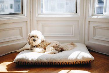【獣医師監修】老犬が下痢をする原因と対策。食事はどうする?絶食すべき?