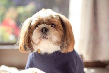 老犬に多い心臓病「僧帽弁閉鎖不全症」。症状や治療法を獣医師さんに聞きました