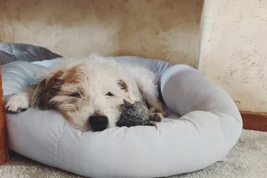 老犬の睡眠時間が変化したときに注意すべきこと