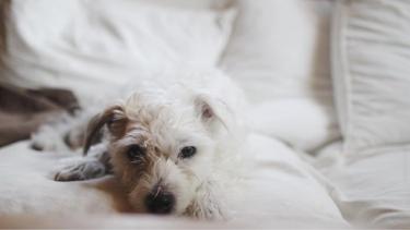 老犬が嘔吐したらどう対処すべき?動物病院へはいつ行けばいいの?【獣医師監修】