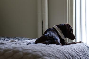 【犬の腹水とは】症状や治療法、腹水を抜くリスクなどを獣医さんに聞きました