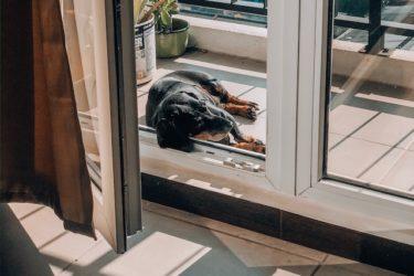 【老犬の睡眠事情】睡眠時間が変化するのは年のせい?注意点は?