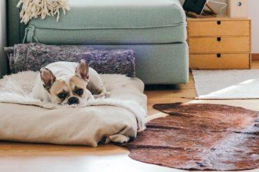 【獣医師解説】寝たきりになった愛犬の介護について、飼い主さんができること