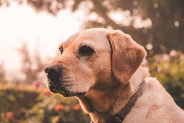 【老犬に多い糖尿病】症状や食事内容について獣医さんに聞きました