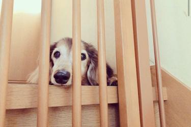 老犬が吠えるようになるのはなぜ?正しい対処法を行動治療の獣医師に聞きました!