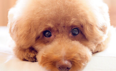 シニア犬の体に優しいマッサージのやり方と注意点【獣医師監修】