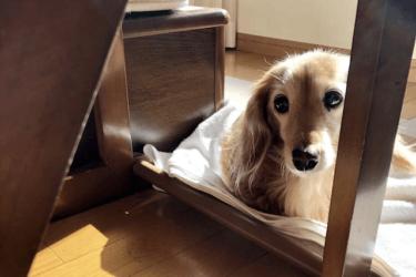 老犬の目やに、どうケアする?原因と対処法、取り方などを解説