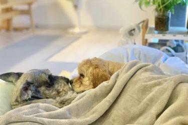 【犬同士の相性を確認できる】多頭飼育をしたい方にオススメな保護団体とは?