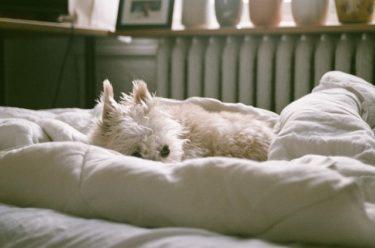 【獣医師監修】老犬が立てないとき、後ろ足に力が入らないときはどうすべき?