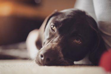 がん(癌)になった犬を支えるための食事について【獣医師が解説】
