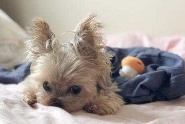 【シニア犬(老犬)のてんかん】症状や対策をわかりやすく解説◎