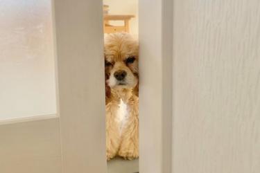 【シニア犬(老犬)が寝ない時の対処法】つらくなったら早めに相談を
