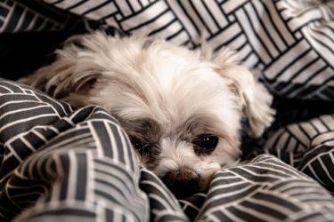 【獣医師が解説】犬の脳腫瘍の症状、治療法、介護の仕方をわかりやすく