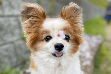 シニア犬(老犬)の毛並みが気になる…。毛並みが変化する原因と対策