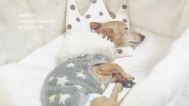 シニア犬は体が冷えやすい!愛犬の体を温めてくれる温活アイテム
