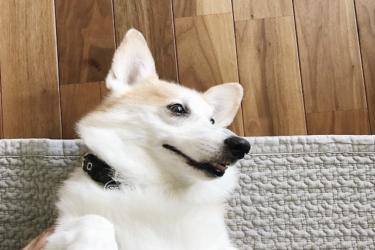 シニア犬にオススメな『腸活』。腸内環境を整えて健康な体へ!