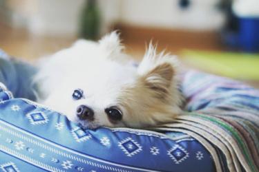 【愛犬の肝臓をいたわる食事】フード選びのポイントを獣医師が解説!