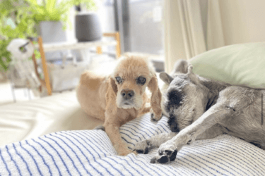 老犬になっても快適に過ごしてもらうために。お部屋作りのポイント8つ