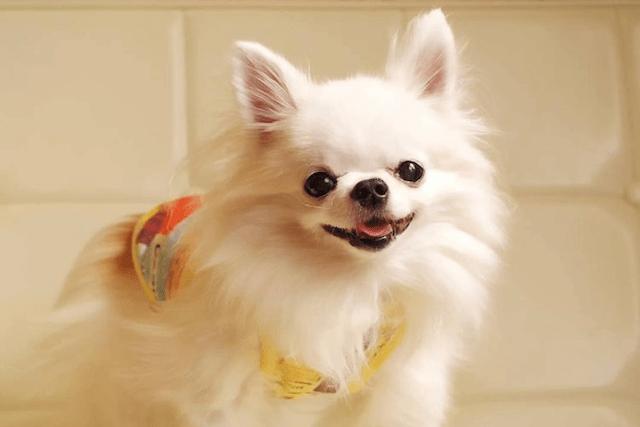 微笑む老犬