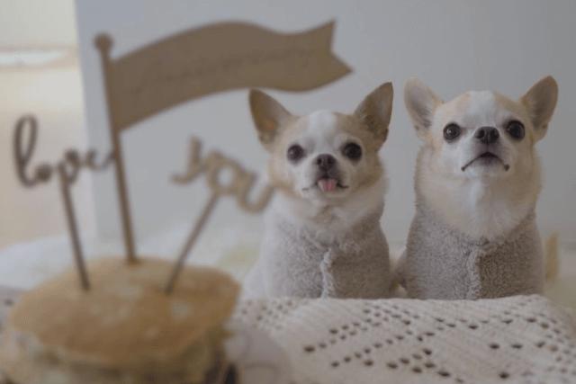 パンケーキと老犬