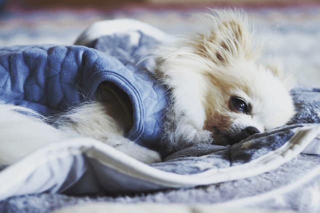 休憩する老犬