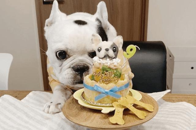 ケーキと老犬