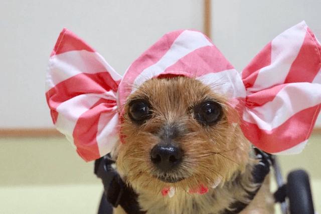 キャンディーの帽子と老犬