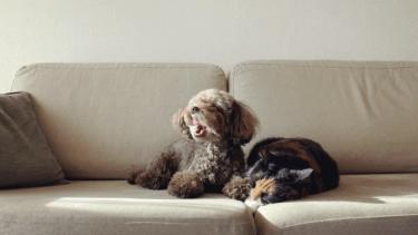 愛犬の腎臓病と上手に付き合う。療法食以外に与えられるおやつはある?