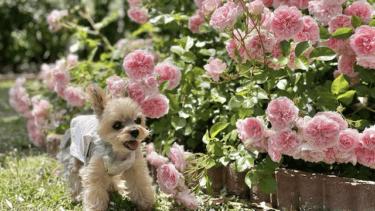 老犬になって目が見えなくなったら、どんなお世話が必要?