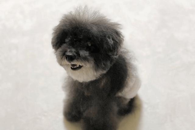 おむつの老犬