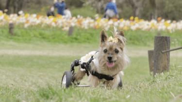 シニア犬は積極的に取り入れたいオメガ3脂肪酸◎その効果とは?