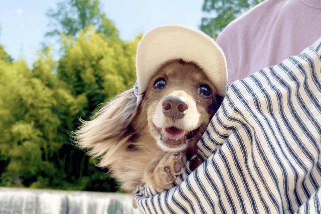 嬉しそうな老犬