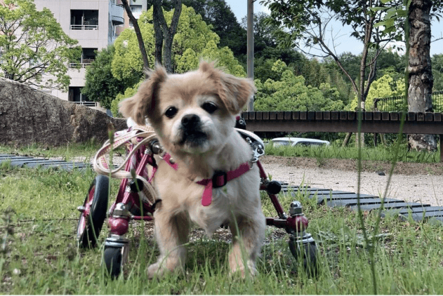 きょとんとした老犬