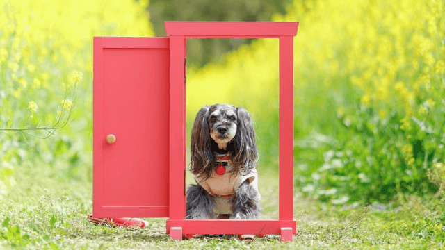 どこでもドアと老犬