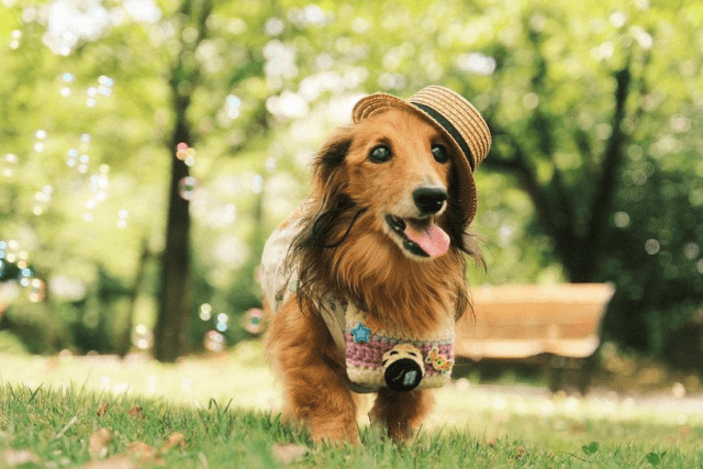 カメラマンな老犬