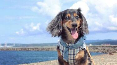 愛犬の視力が低下してもお散歩は楽しめる!みんなのアイデア、集めました♪